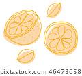 오렌지 단면 일러스트 46473658
