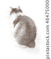 ดินสอดำแมวขาว 46475000