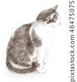 ดินสอดำแมวขาว 46475075