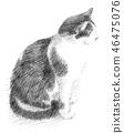 ดินสอดำแมวขาว 46475076