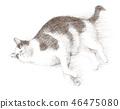 ดินสอดำแมวขาว 46475080