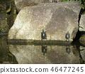 乌龟 爬行动物 爬虫类的 46477245