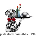Waiter dalmatian dog with dishes, wine and rose. Isolated on white 46478396