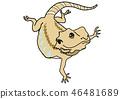 포즈를 취하는 아이의 턱수염 도마뱀 46481689