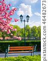 bench, lantern and blossoming sakura tree 46482673