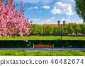 bench, lantern and blossoming sakura tree 46482674