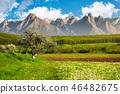 trees, rural fields and high mountain ridge 46482675