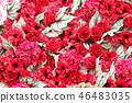 紅色花背景材料 46483035