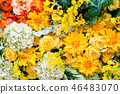 五顏六色的花背景材料 46483070