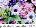 所有花的背景材料 46483071
