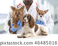 Veterinarian and cute pets luxury pet hospital   46485016