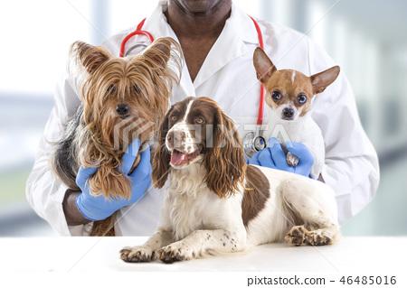 Veterinarian and cute pets luxury pet hospital   46485016