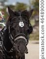 馬 46489000