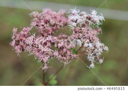 autumnal, flowering plant, bloom 46495815