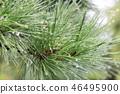 สวน,ต้นไม้,ไซตะมะ 46495900