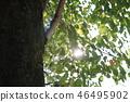 สวน,สวนสาธารณะ,ต้นไม้ 46495902