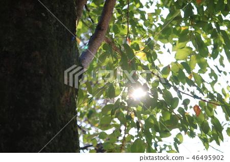 park, parks, tree 46495902