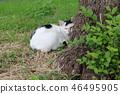 สวน,สวนสาธารณะ,แมว 46495905