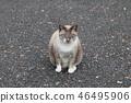 แมว,สวน,สวนสาธารณะ 46495906