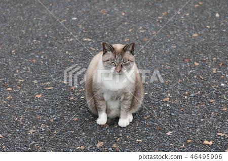 cat, pussy, park 46495906
