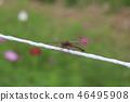 ฤดูใบไม้ร่วง,สวน,สวนสาธารณะ 46495908