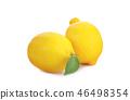 lemon fruit an isolated on white background 46498354