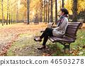 秋天 秋 楓樹 46503278