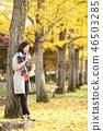 秋天 秋 書籍 46503285