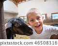 a child plays and has fun with goats 46508316