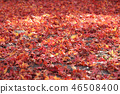 Autumn leaves 46508400