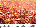 Autumn leaves 46508401