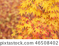 Autumn leaves 46508402
