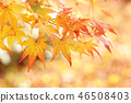 Autumn leaves 46508403