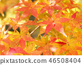 Autumn leaves 46508404