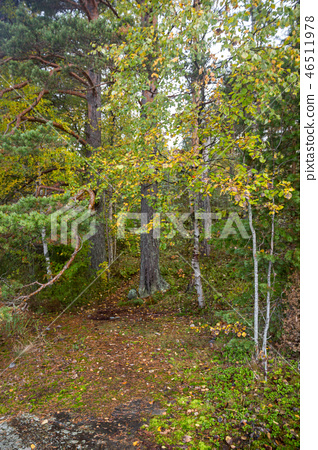 Yellow Green Autumn Forest Backdrop Pine  46511978