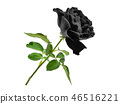black rose with leaf isolated on white background 46516221