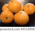 橘子 桔子 蜜柑 46516906