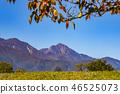[Kai City, Yamanashi Prefecture] Autumn Akasakadai General Park, Dragon Park 46525073