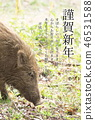 New Year's Day 2019 Boar 46531588