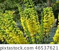 ดอกไม้,ฤดูหนาว 46537621
