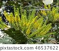 ดอกไม้,ฤดูหนาว 46537622