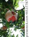 white peach 46537787