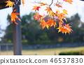 단풍 나무 단풍 46537830