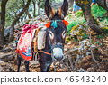 Donkey stands on the path to Zeus Cave, Crete 46543240
