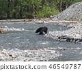 Asian black bears 46549787