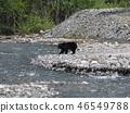 Asian black bears 46549788