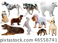 different dog breeds 46556741