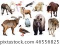 european animals isolated 46556825