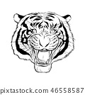 Hand drawn head of tiger. 46558587