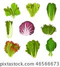 vegetable ingredient lettuce 46566673